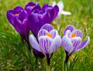 wiosna na Kaszubach