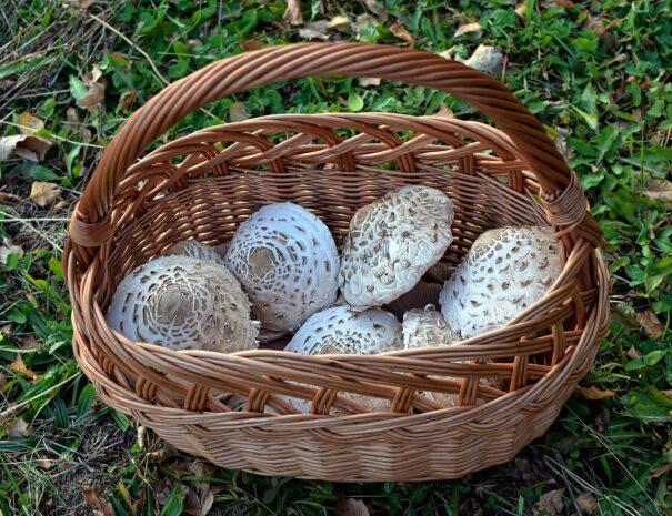 kaszuby-grzyby-lasy-grzybobranie