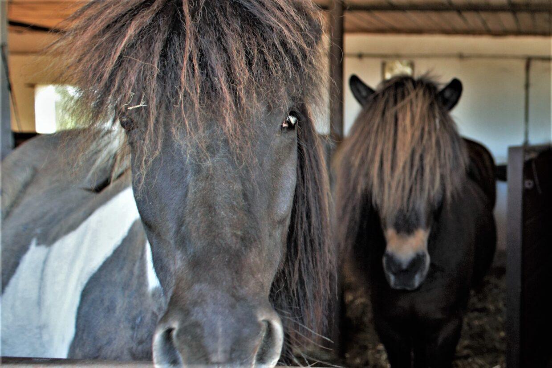 stadnina sominy kaszuby konie stajnia