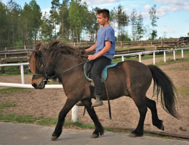 Stadnina koni na Kaszubach