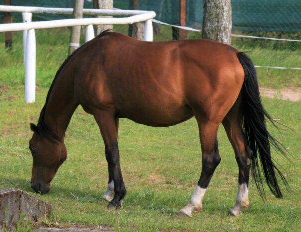 stadnina-sominy-kaszuby-konie-stajnia-atrakcje-trzebuniowa-darga-co-robic