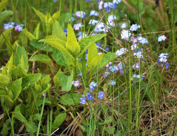 trzebuniowa-darga-posesja-natura-kwiaty-laki