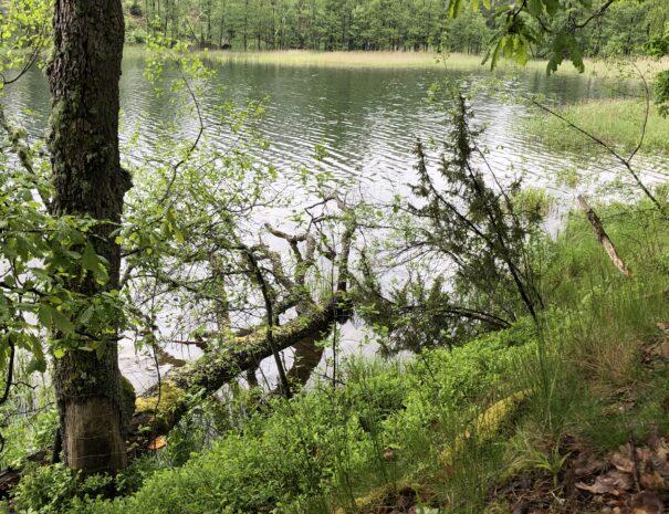 las-trzebun-kaszuby-jeziora