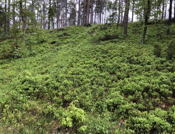 las-trzebun-kaszuby-okolice-natura